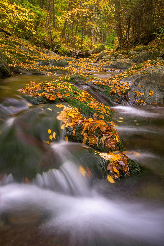 Autumn on the White River