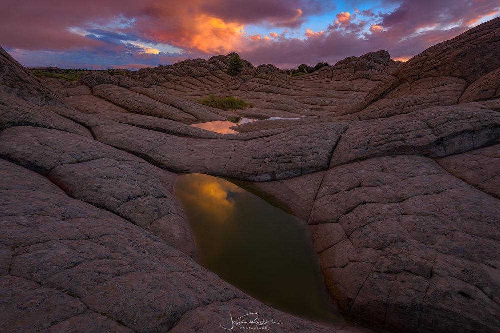 Lone Tree, Paria/Vermillion Cliffs Wilderness, AZ