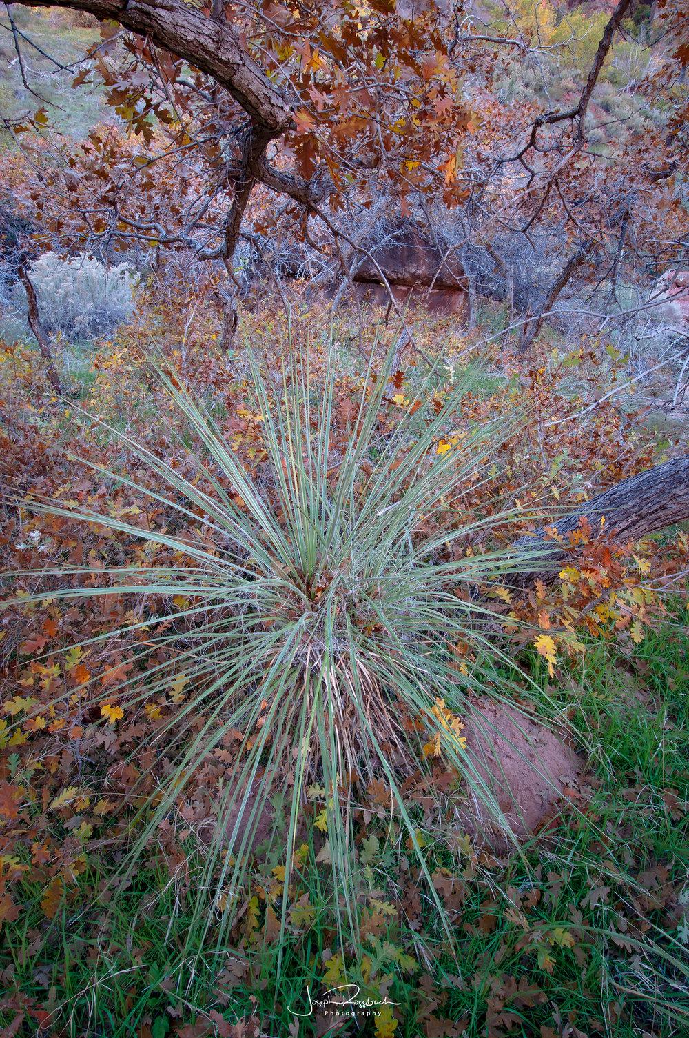autumn-color-zion-national-park.jpg