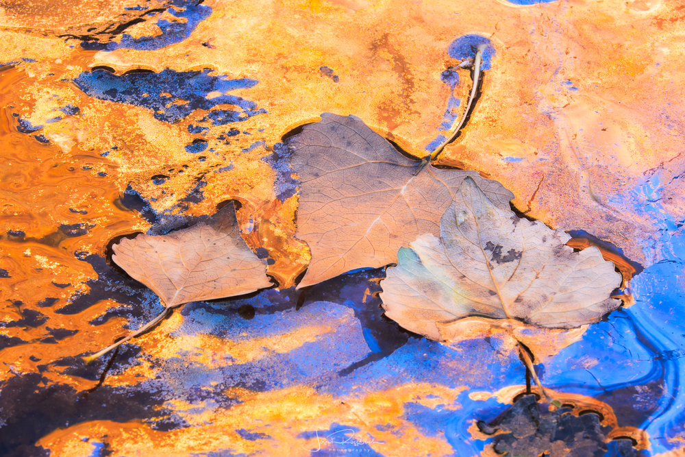 cottonwood-leaves-reflections-zion-national-park.jpg