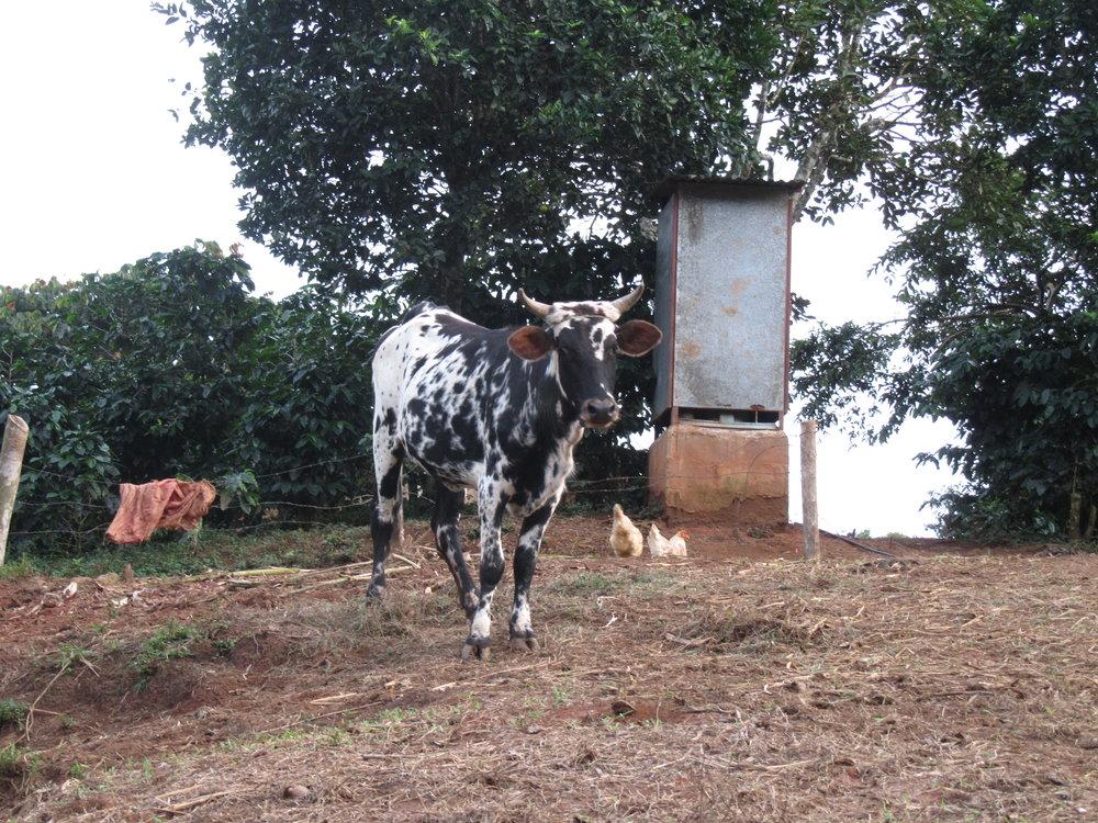 Ronald vaca.JPG