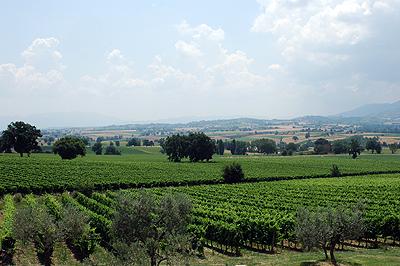 Perticaia-vineyards-web.jpg