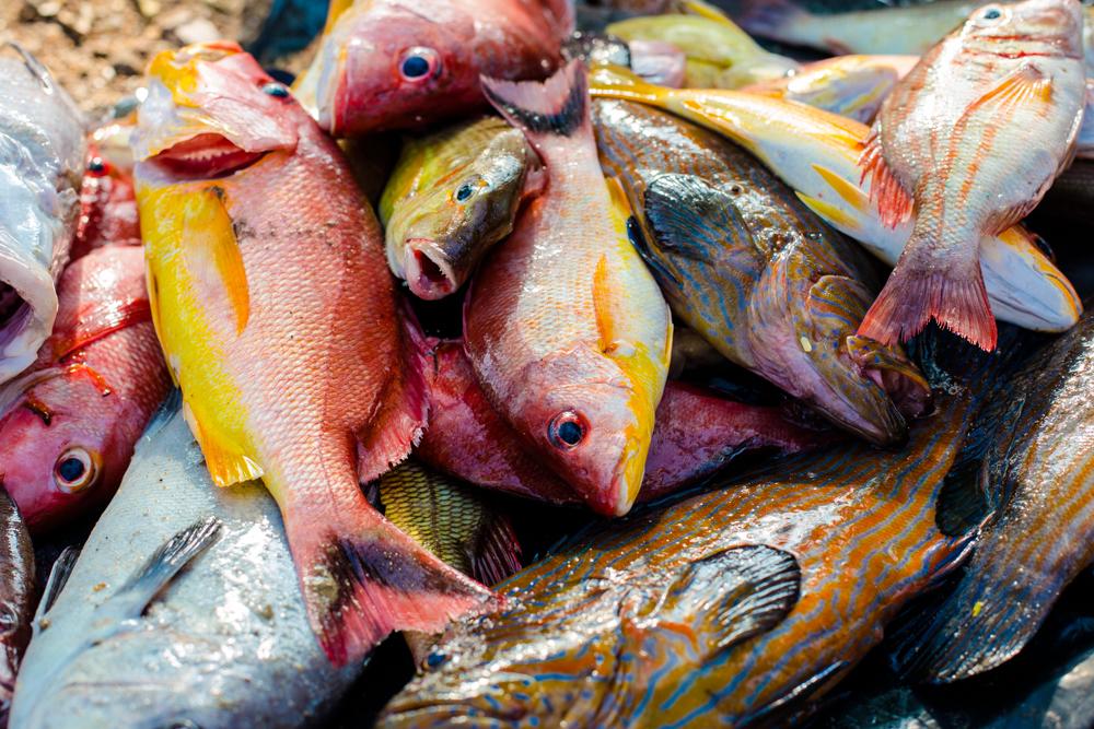 sri_lanka_travel_photography_galle_fish_market-1011.jpg