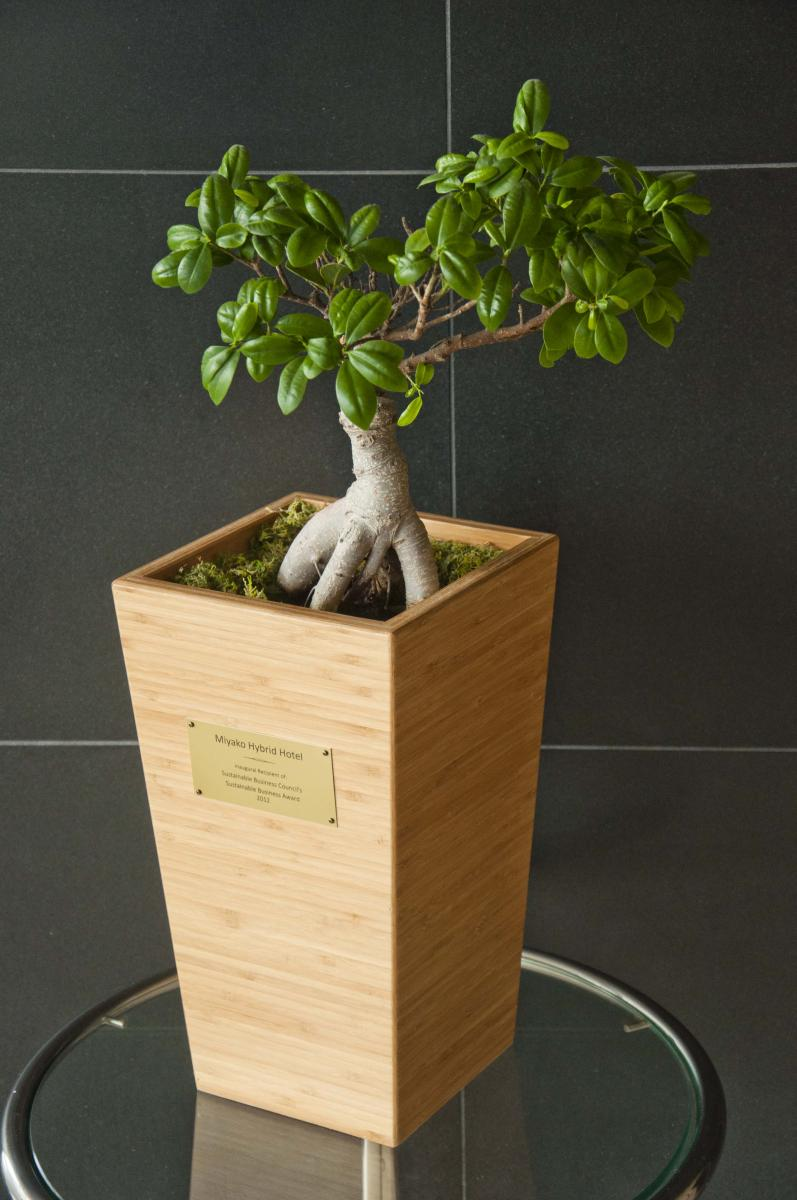The SBC Giving Tree Award on display at the Miyako Hybrid Hotel.