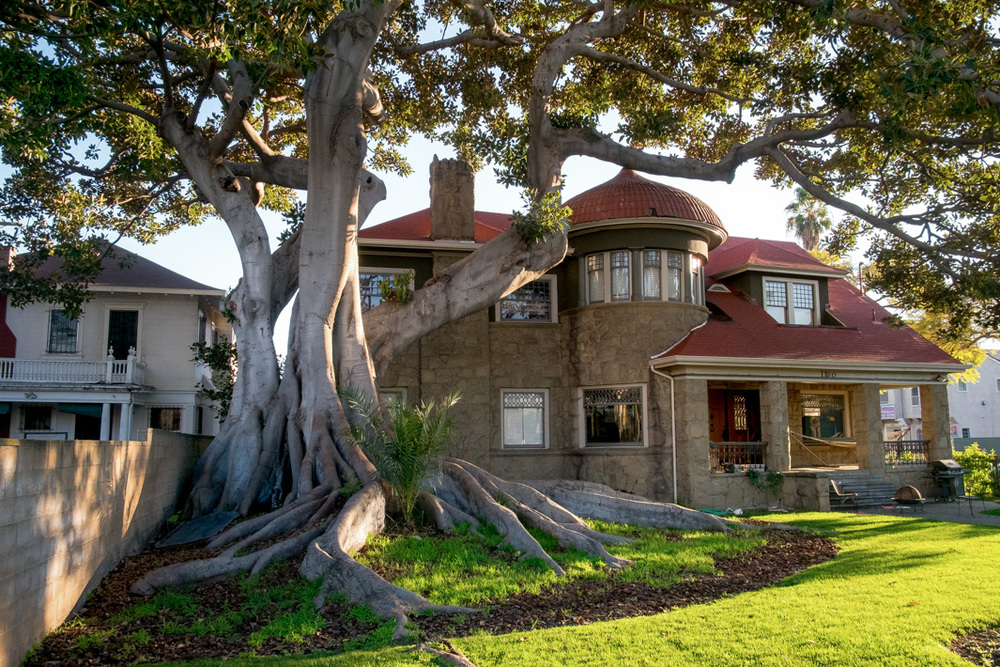 1899-Ecung-Ibbetson-House-with-Moreton-Bay-Fig-Tree.jpg