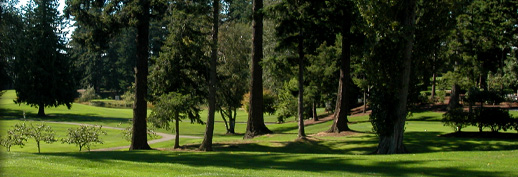 Trees on Course.jpg
