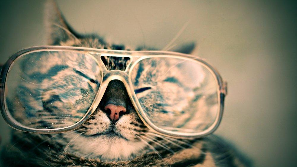 Or maybe a stray cat designer?Photo by Octavio Fossattion Unsplash