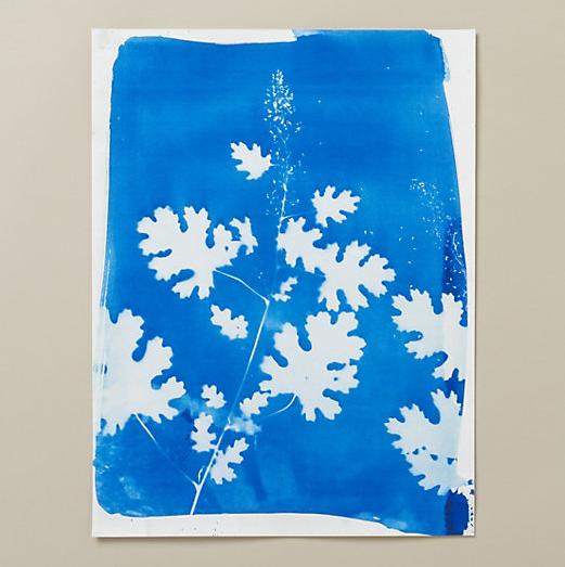 Rinne Allen  20x15 plume poppy cyanotype , $168
