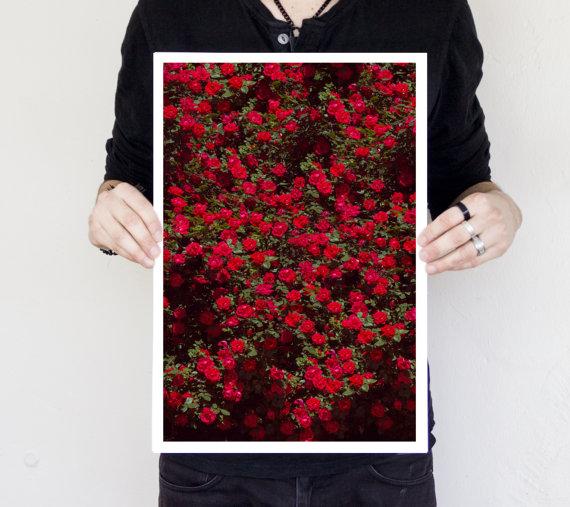 Curious Walls  8x10 rose tree print  $14