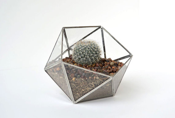 The Land of Salt  terrarium , $78.