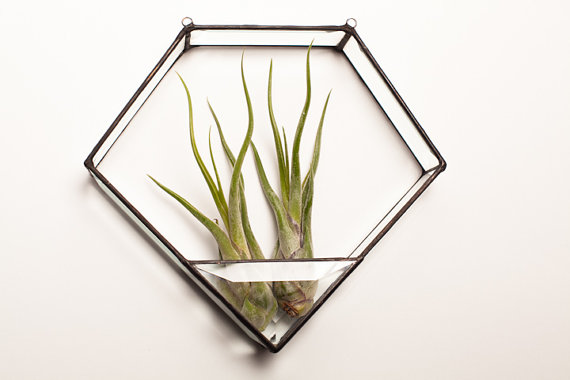 Forge and Fire terrarium, $55