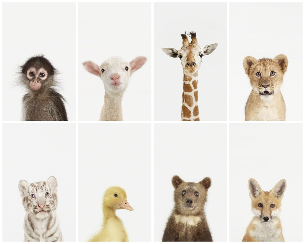 Sharon Montrose's baby animal photographs