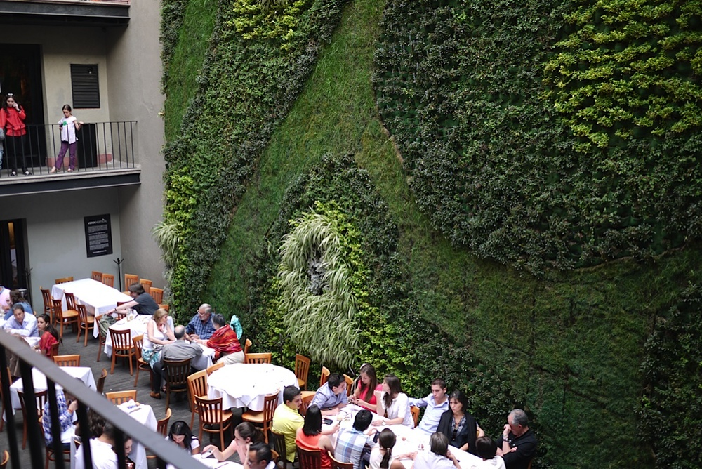 """This is a living wall from the hotel we stayed at in Mexico City called  Downtown Mexico ."""