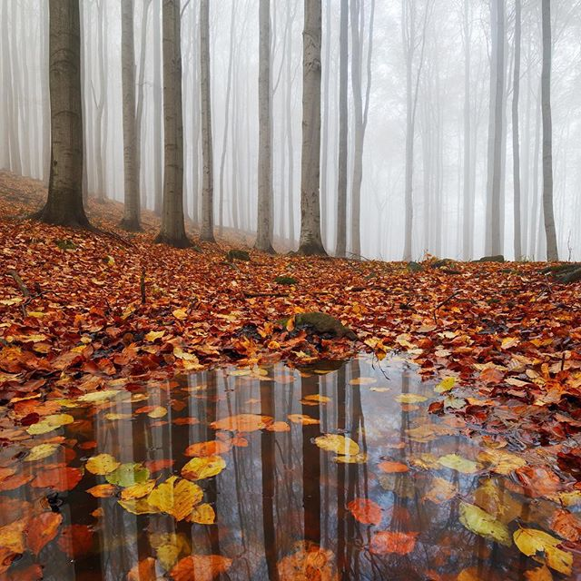 By 👉 @martinrakphoto — Puddly reflections 🍂