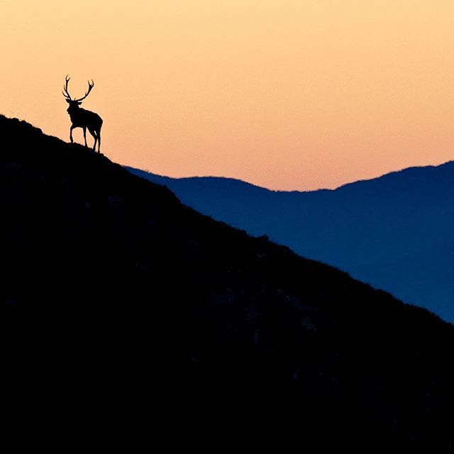"Only a handful of wildlife photographers have a style so definitively established that we can immediately tell who made the image, before seeing his/her name. Bruno is one of these. Check out our interview with him! (Link in bio) 💥 — ""During the red deer rut in the Apennines, the largest males reach the mountain arenas to compete with other stags and the tension starts to rise..."" by 👉 @brunodamicisphoto  #abruzzo 🇮🇹"