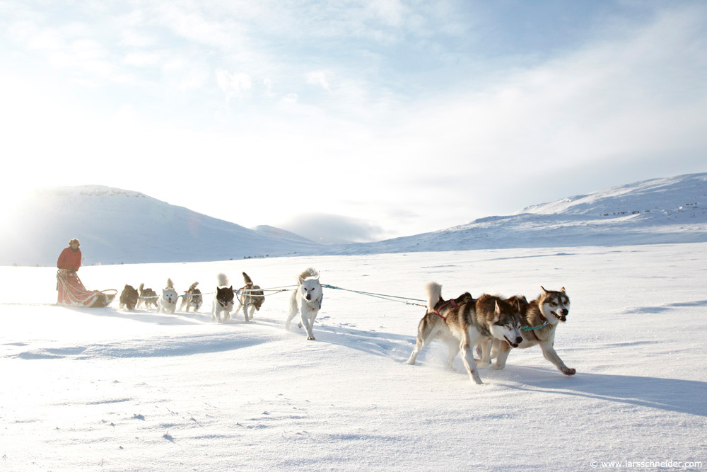 dogsledding-photo-expedition-Norway-11.jpg