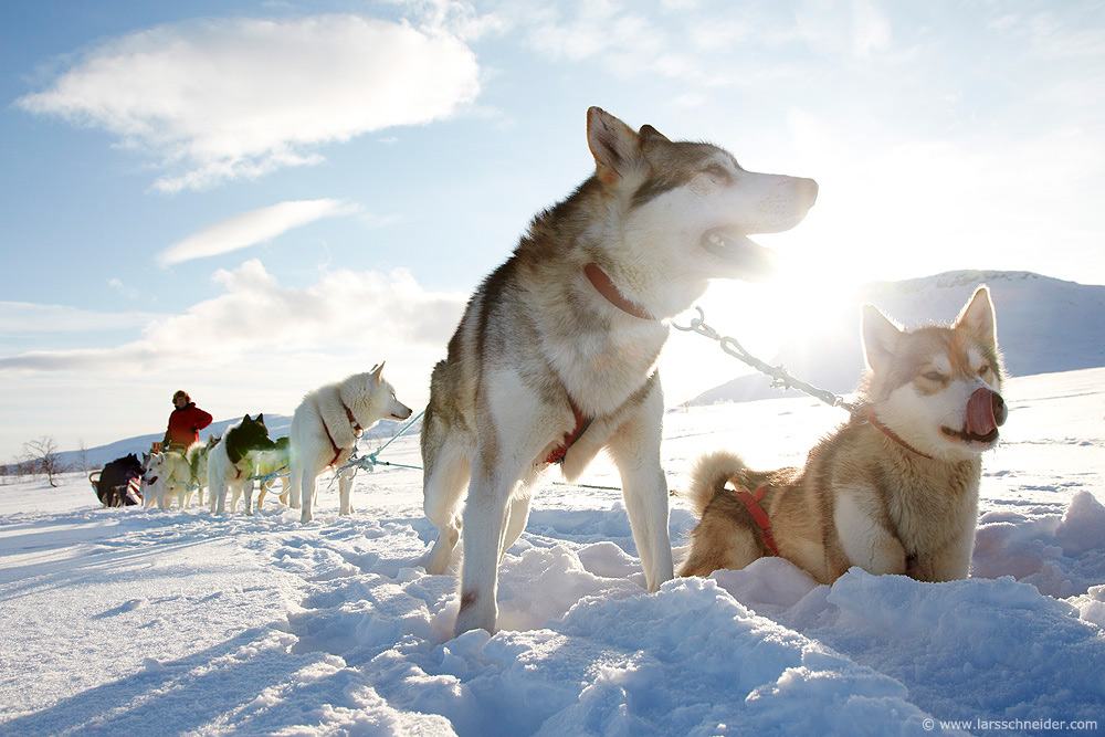 dogsledding-photo-expedition-Norway-12.jpg