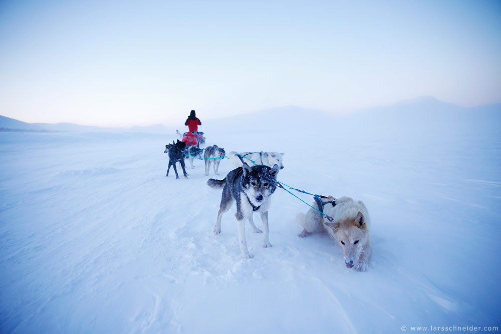 dogsledding-photo-expedition-Norway-18.jpg