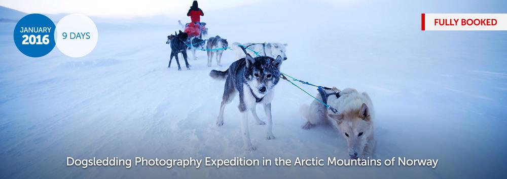 2016-Dogsledding-Arctic-Norway.jpg