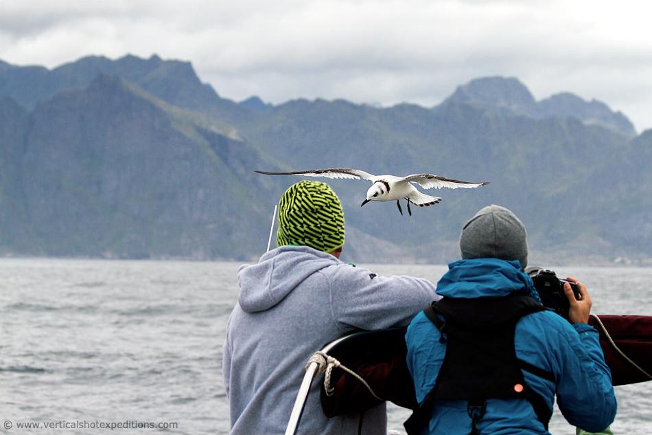2014-Norway-Sailing-Bird-01-950.jpg