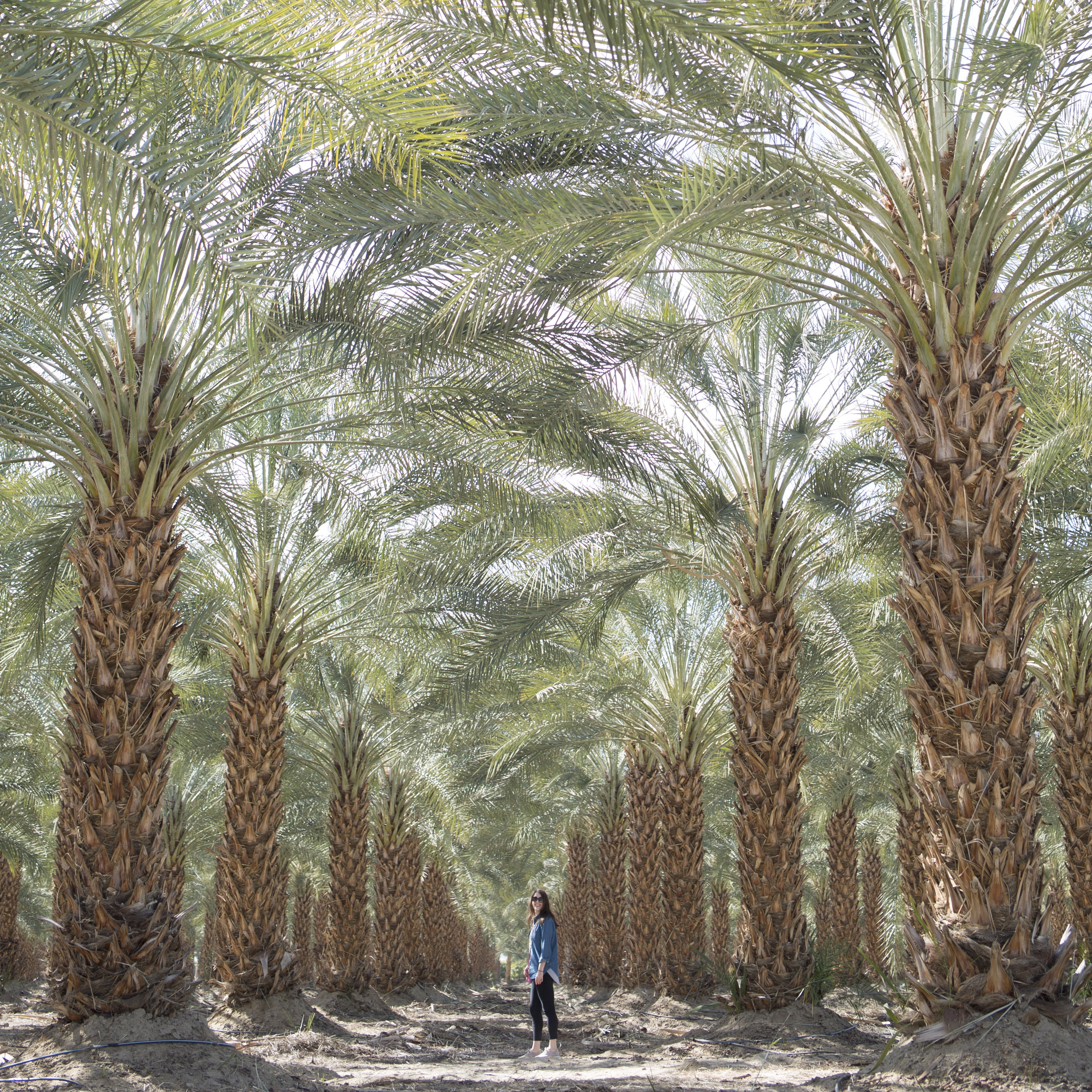 This palm tree farm was my fav! I've never seen anything so vast and magnificent. image by @lizzie_darden