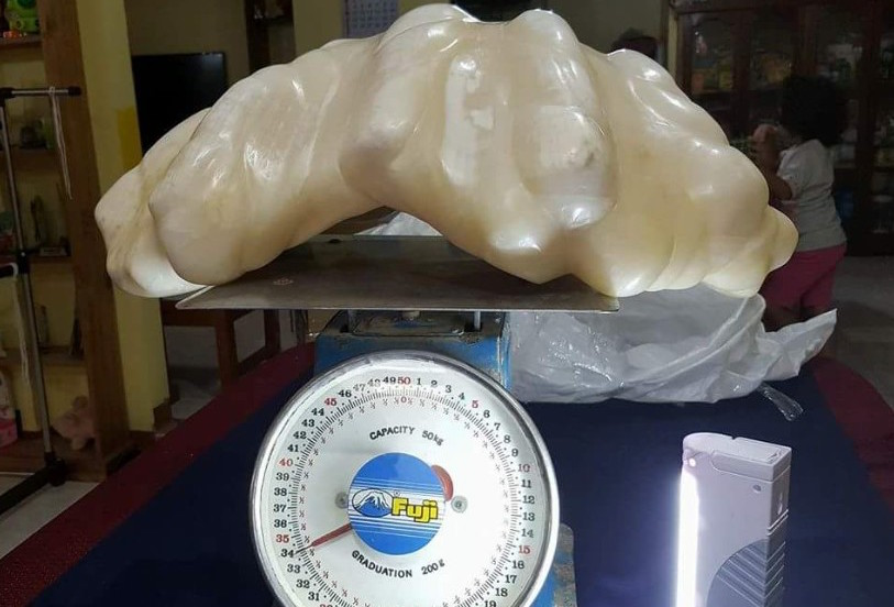 A fisherman and pearl collector found Giant clam pearl was found near his home in Palawan, Philippines in 2006. He kept the pearl as a good luck token, under his bed, for ten years before bringing it to government officials in 2016. It is thought to be the worlds largest pearl, weighing in at a weight of 72 lbs. This broke the world record for the Pearl of Lao Tzu, which weighs in at just under 15 lbs, another Giant pearl for in Palawan in 1939, which appraised from 42 - 93 million dollars!