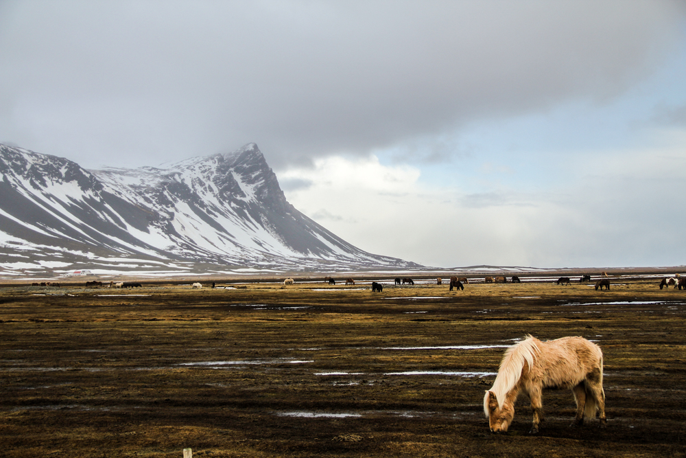 iceland-6257.jpg