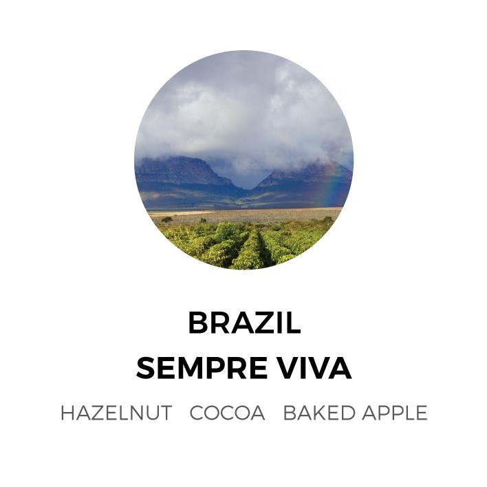 Brazil-SempreViva.jpg