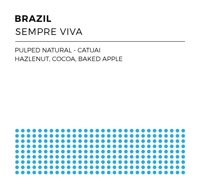 BrazilSempreViva_WEB.jpg