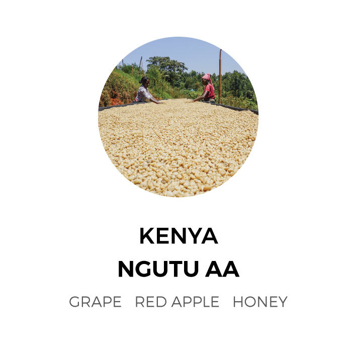 Kenya-Ngutu-AA.jpg