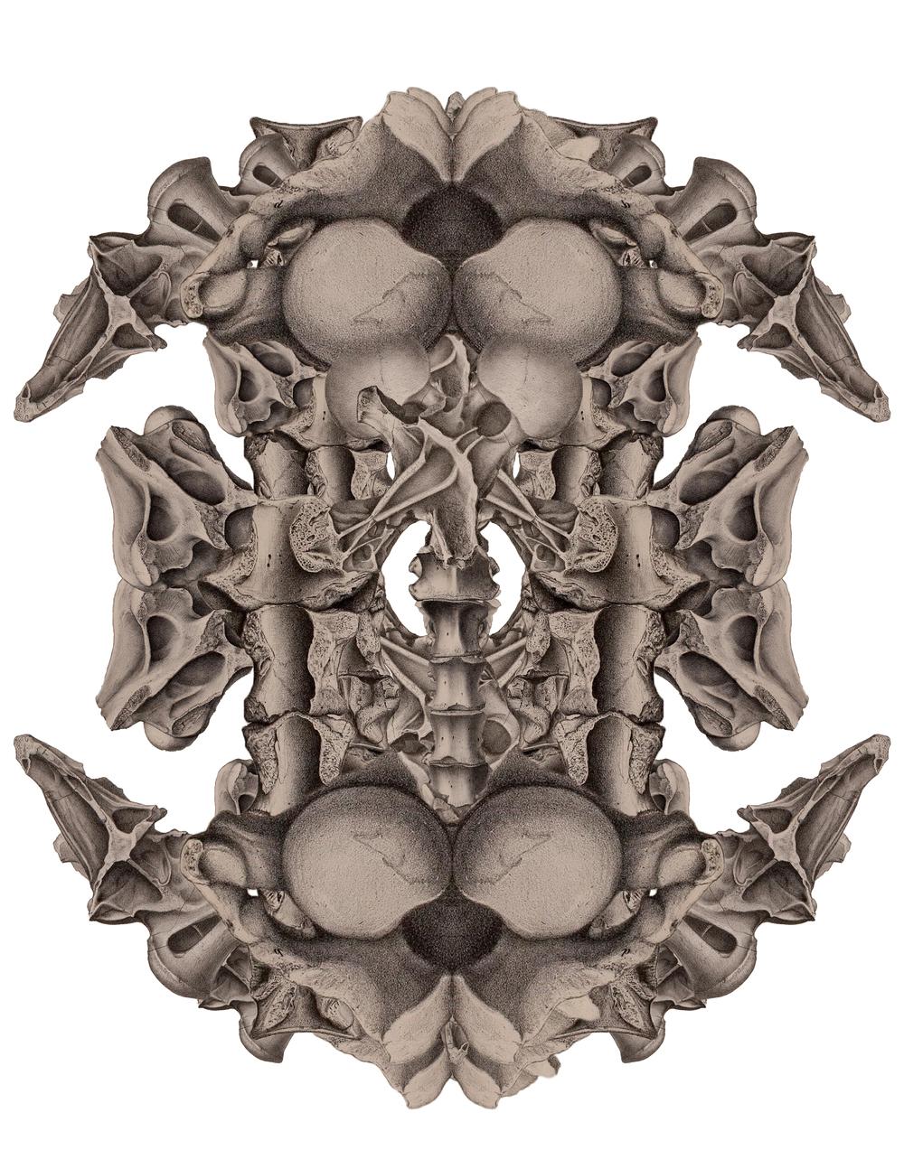 bonemapspinalcolumns.jpg