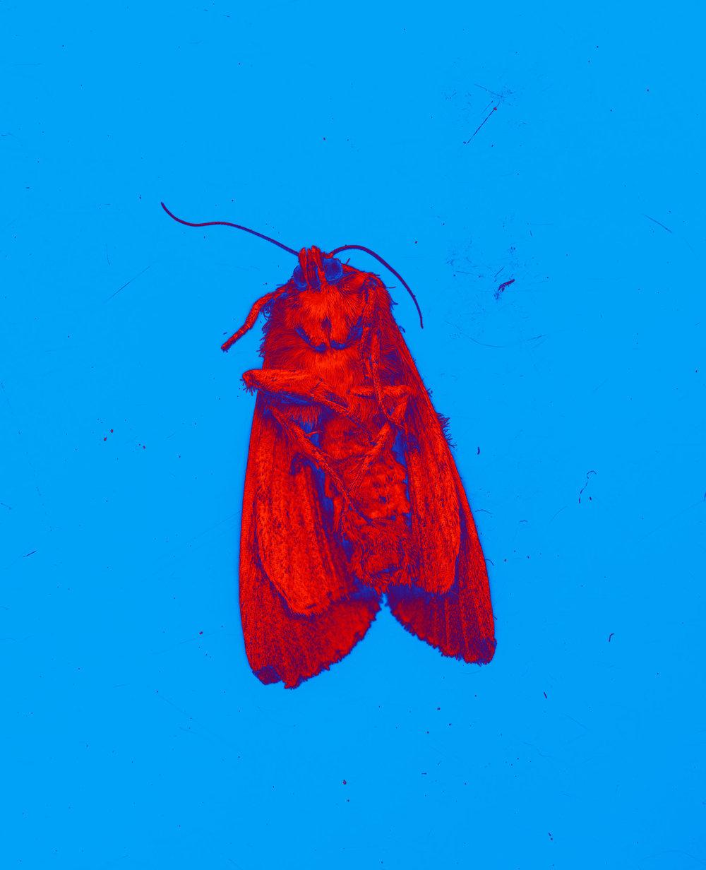 Moth002.jpg