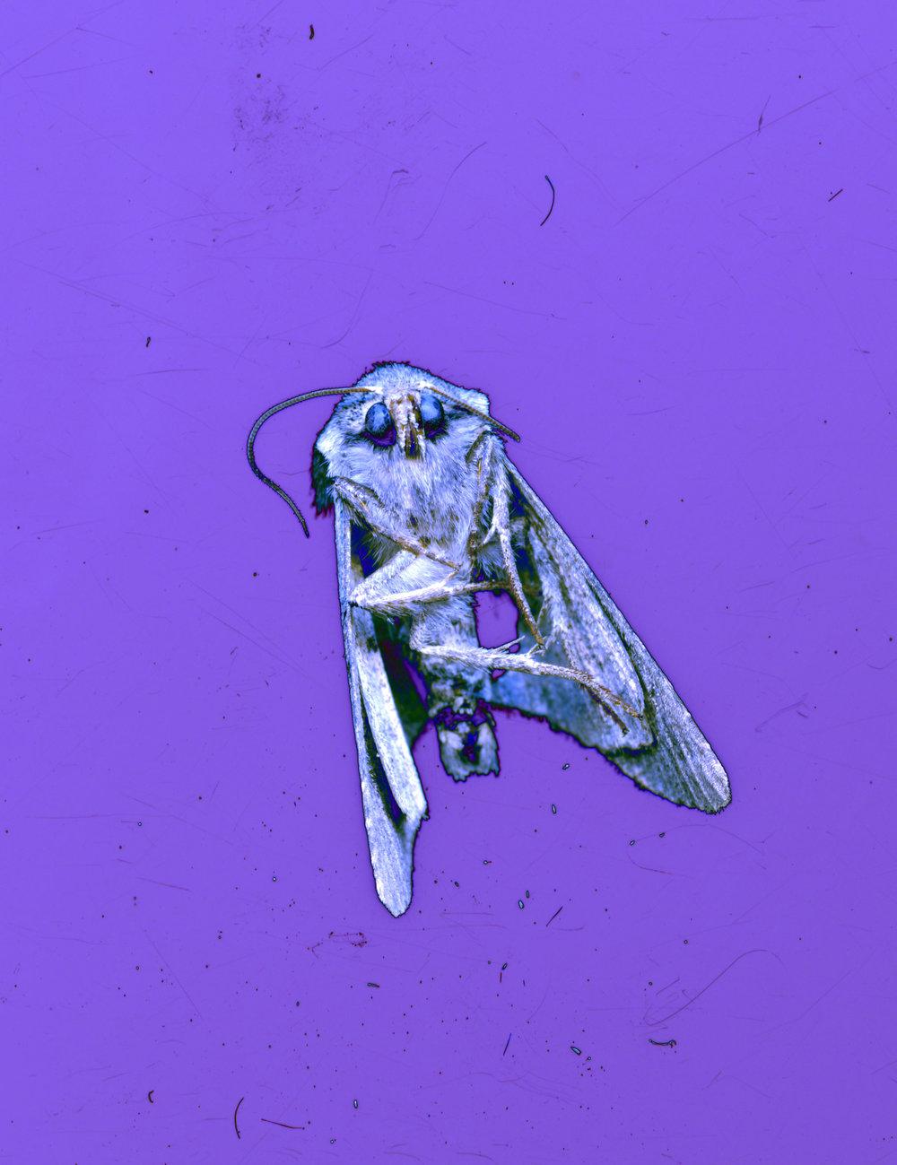 moth021.jpg