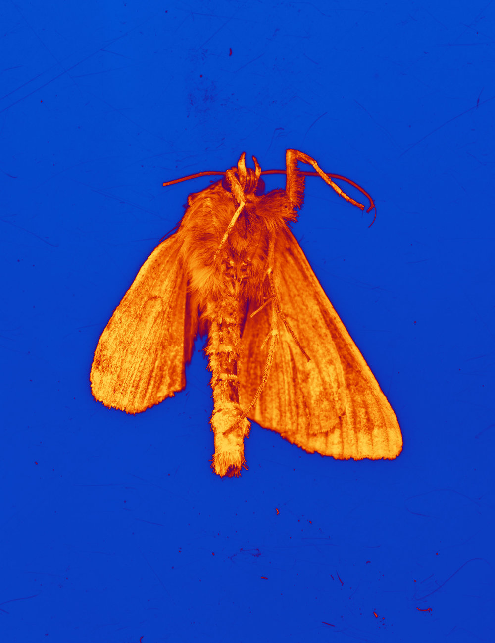 moth020.jpg
