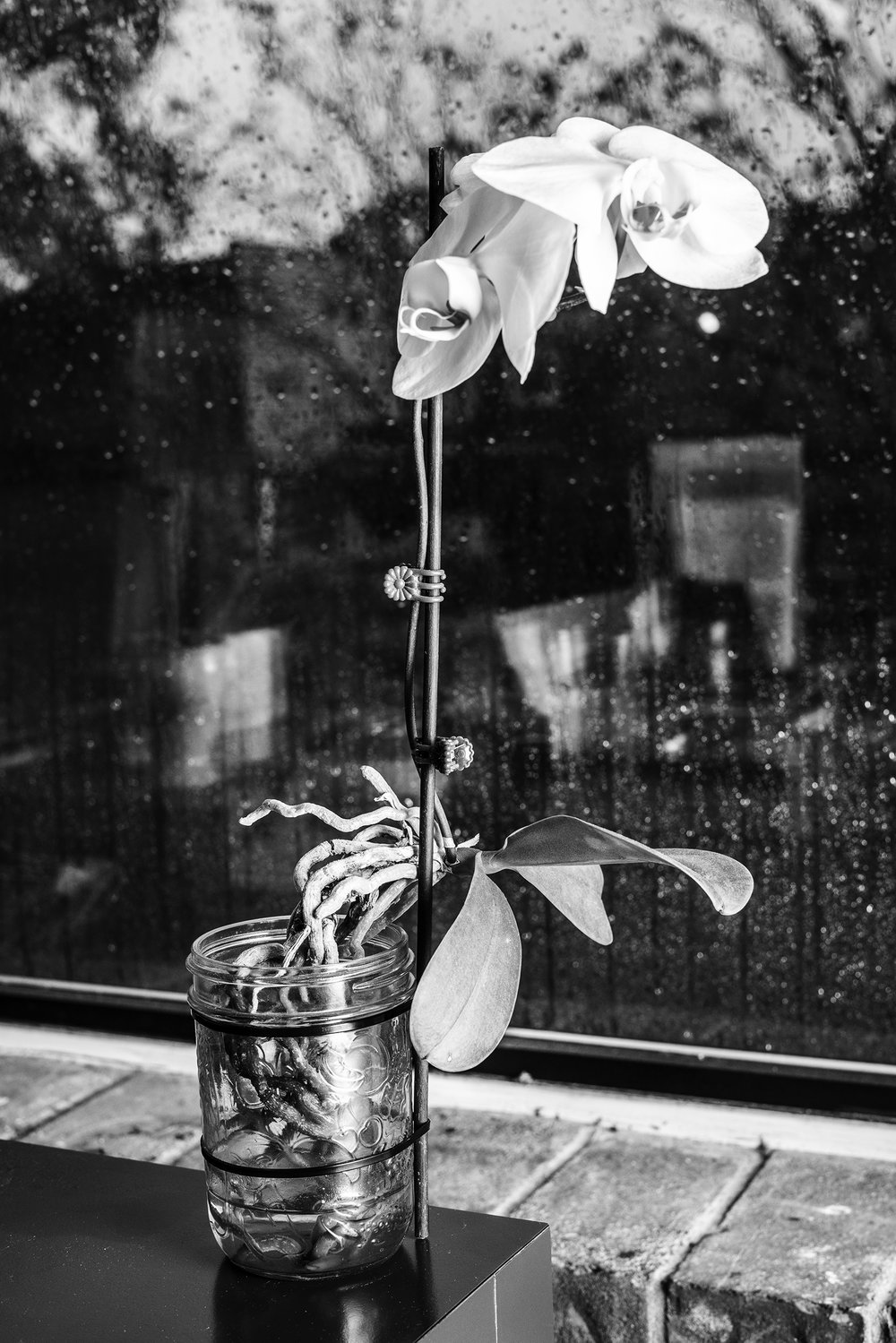 Annie's_Orchid.jpg