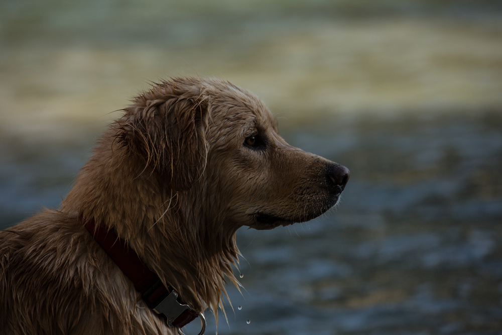 Wonderful wet dog