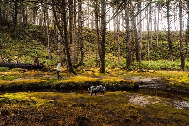 Wondering around in velvet carpeted swamp. • • • • • #hiking #hike #outdoors #oregoncoast #traveloregon #oregonexplored #hikingadventures #trekking #wilderness #backpacking #getoutside #forest #outdoor #optoutside #trail #scenery #rei1440project #instanature #thegreatoutdoors #trees #lake #pnw #outdoorlife #hiker #oregon
