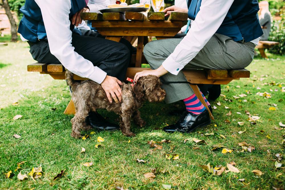 york wedding photographer dog stripey socks