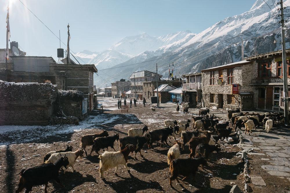 Nepal-223.jpg