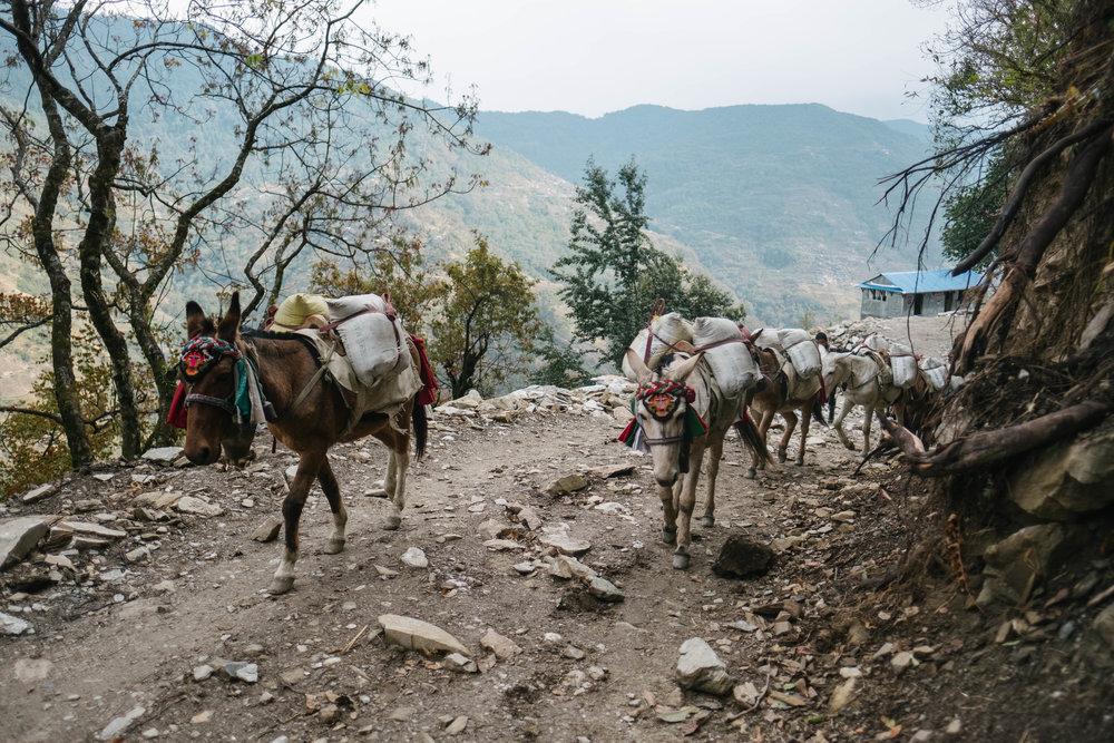 Nepal-365.jpg