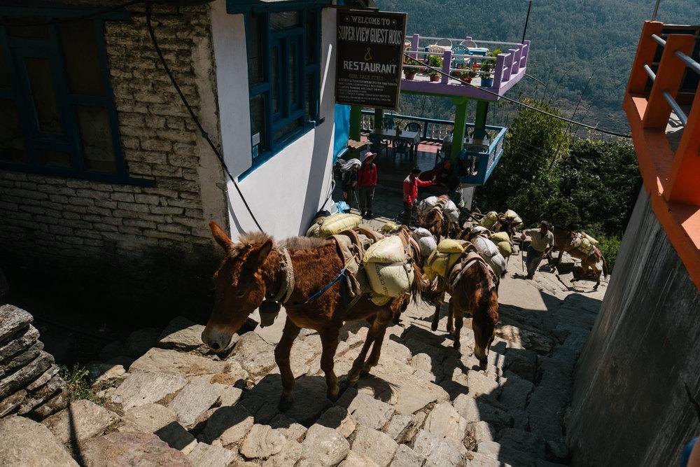 Nepal-433.jpg
