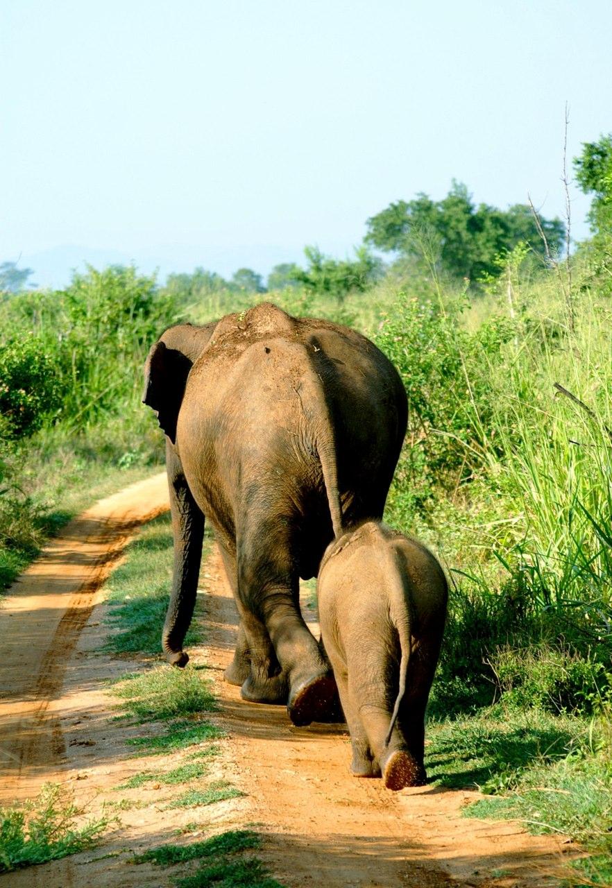 elephants (4).jpg
