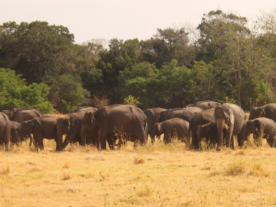 invite-to-paradise-customer-honeymoon-sri-lanka-elephant-safari.jpg