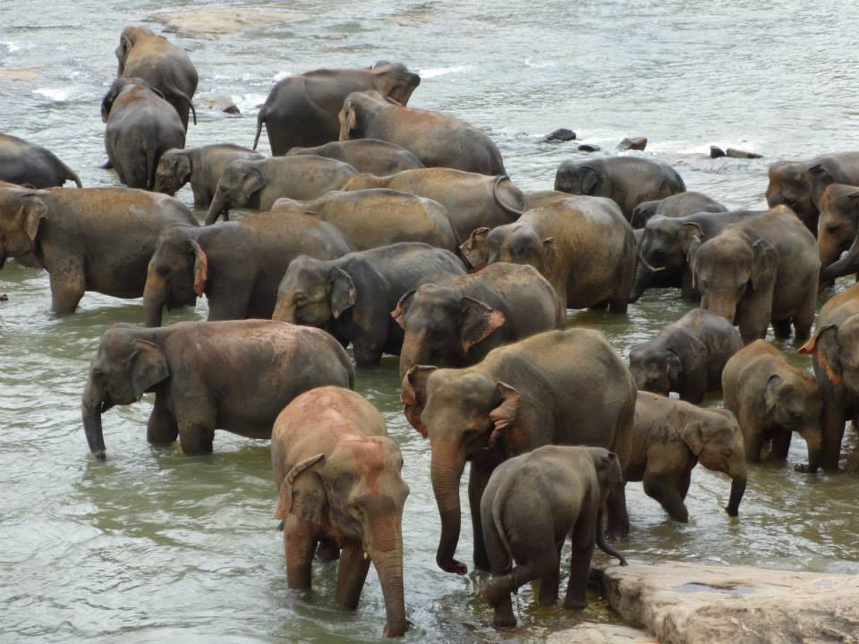 invite-to-paradise-customer-c-honeymoon-sri-lanka-maldives-elephant-orphanage-2.jpg