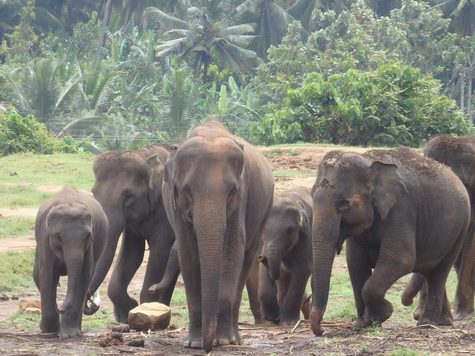 invite-to-paradise-customer-review-claire-simon-honeymoon-sri-lanka-elephants.jpg
