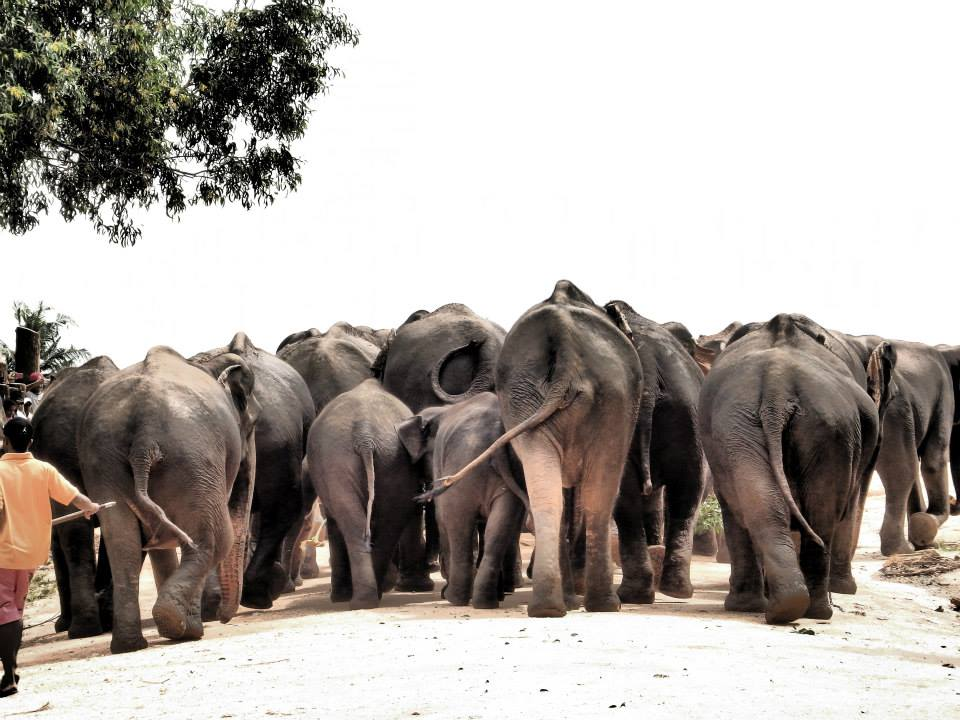 invite-to-paradise-customer-review-claire-simon-honeymoon-sri-lanka-elephants-4.jpg