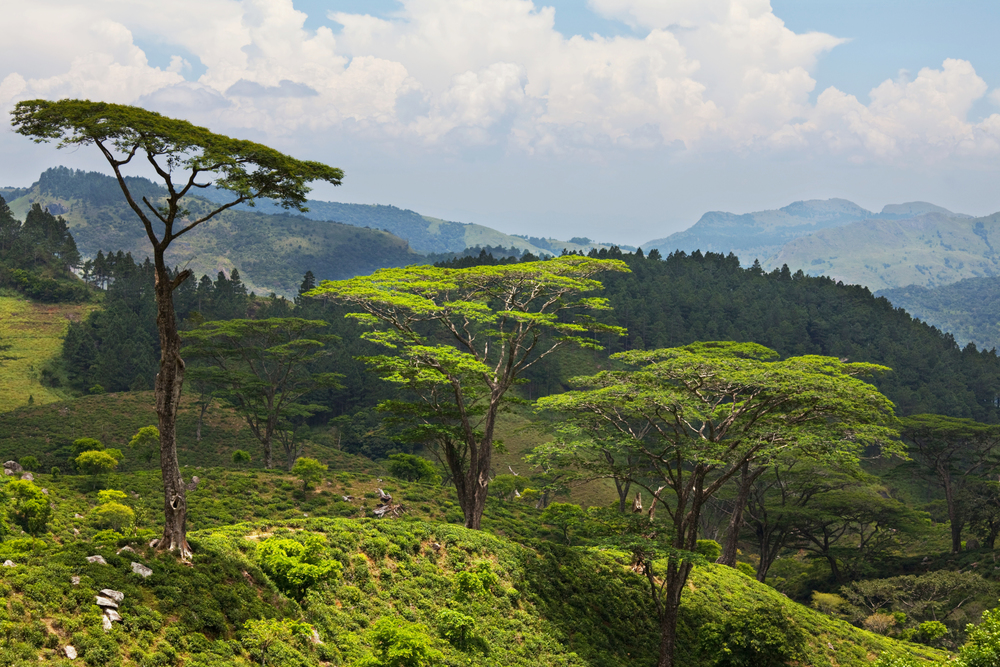 invite-to-paradise-sri-lanka-holiday-honeymoon-tea-plantations-mountains-10.jpg