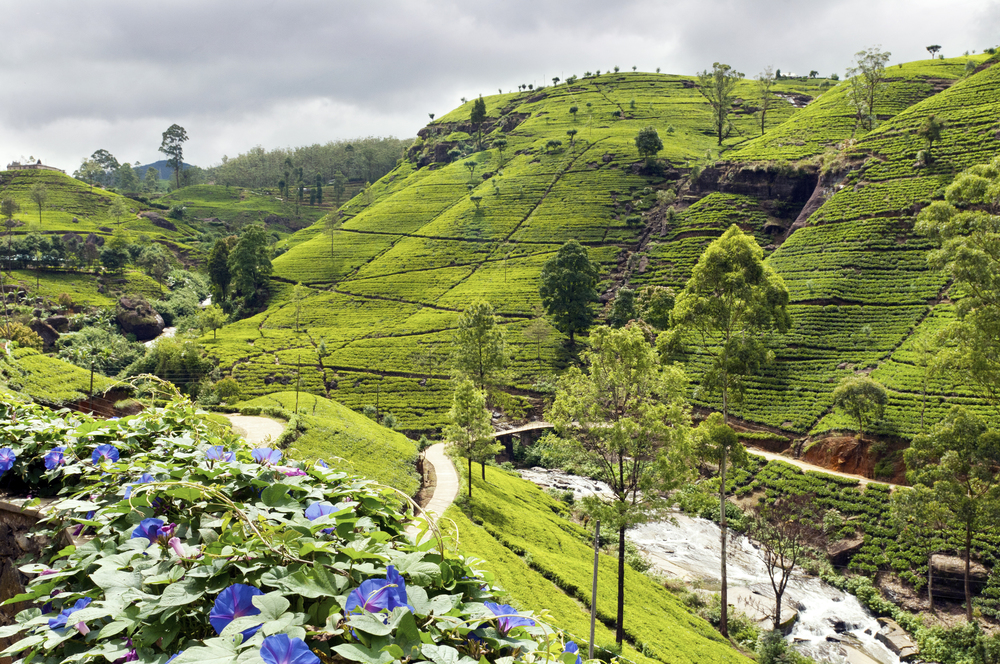 invite-to-paradise-sri-lanka-holiday-honeymoon-tea-plantations-mountains-9.jpg