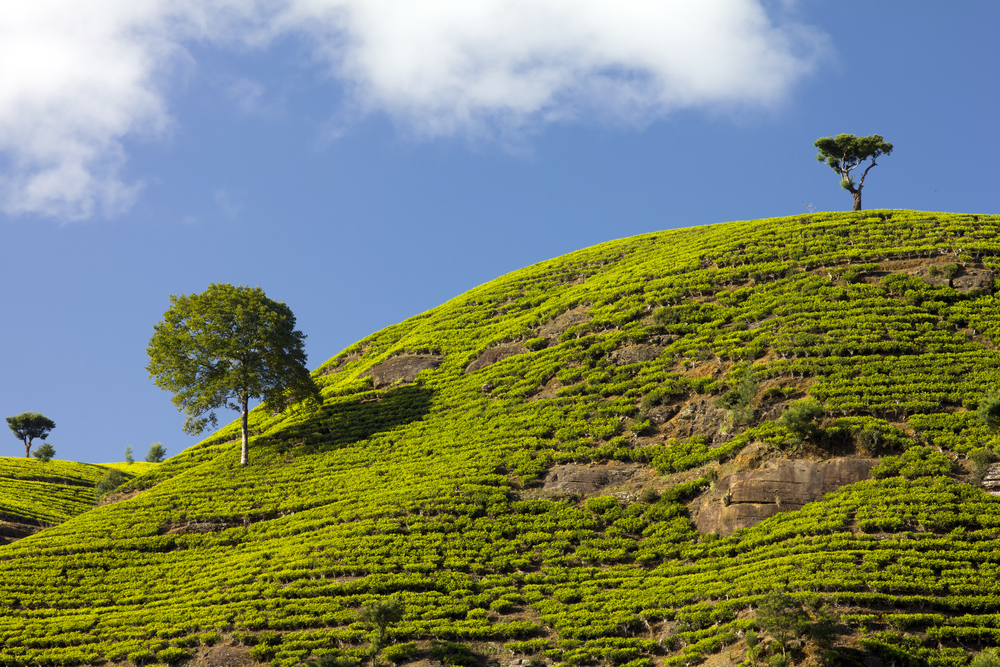invite-to-paradise-sri-lanka-holiday-honeymoon-tea-plantations-mountains-22.jpg