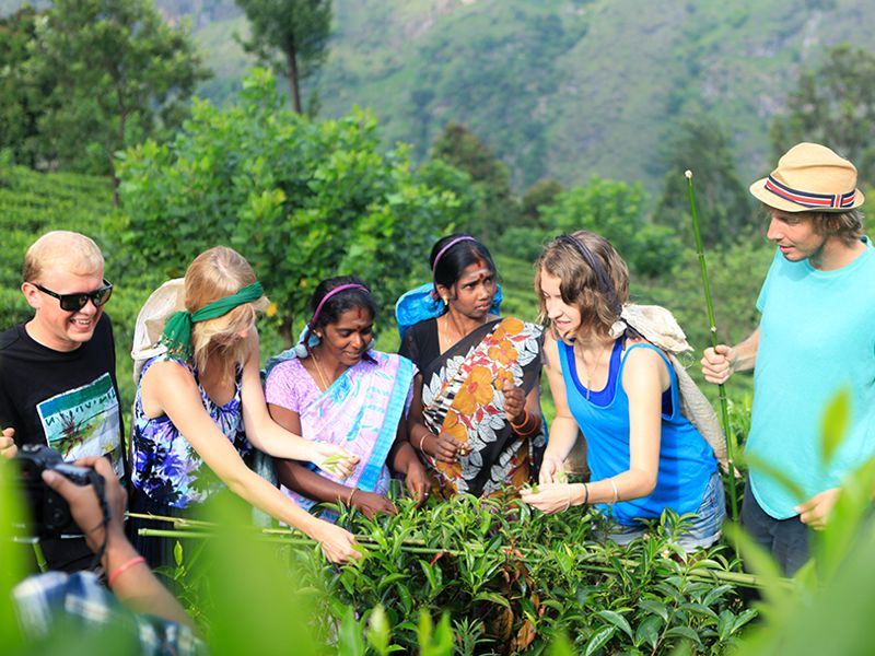 Invite-to-Paradise-Sri-Lanka-holiday-honeymoon-hotel-tea-plantation-boutique-the-secret-ella-tea-plucking-picking.jpg